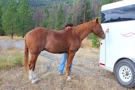 horse-trailor-2