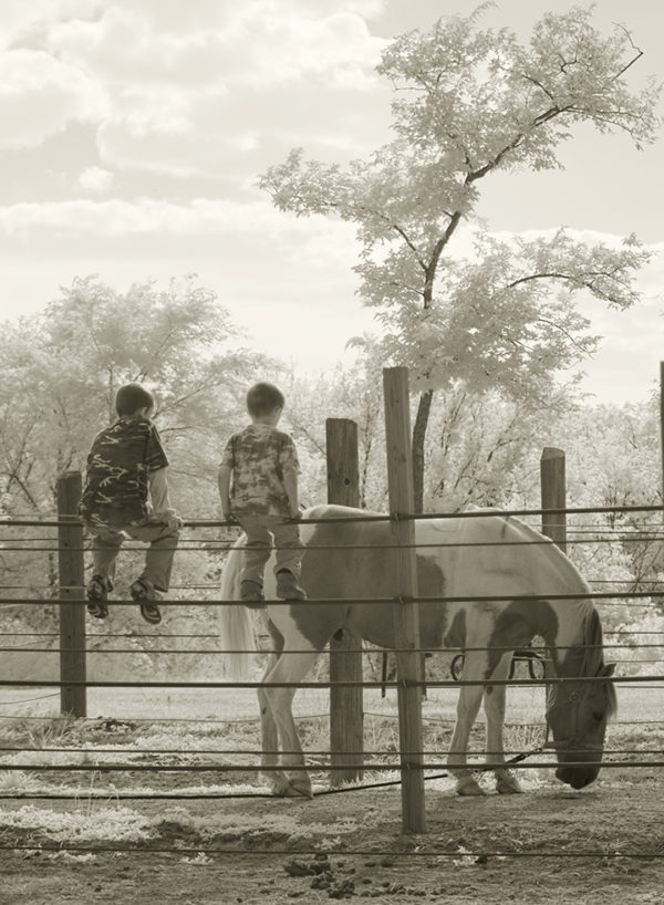 boys-with-horse